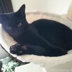 キャットタワーのハンモックの中で寝る子猫