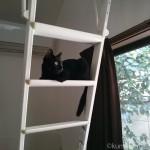 ロフトのはしごから窓の外を見る子猫