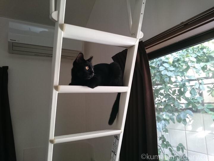 はしごから外を見るふみお