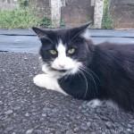 【文京区】墓地のふわもこ猫さんたち