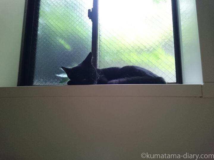 風呂場の窓台で寝るふみお