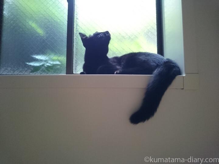 風呂場の窓台のふみお