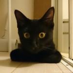 風呂場の外で待つ子猫~猫と一緒に半身浴~
