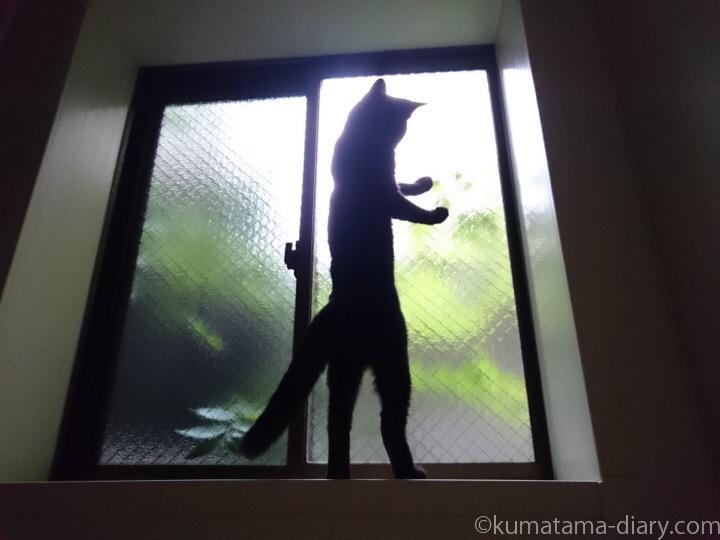窓の外の葉に飛びつくふみお