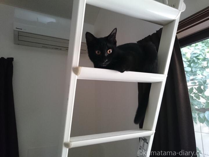 はしごに乗るふみお