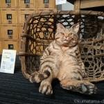 「どうぶつゆうびん局へようこそ!-はしもとみおの木彫の世界-」の猫さんたち