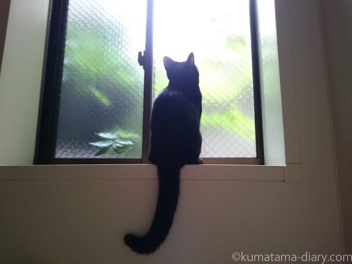 窓の外を見るふみお