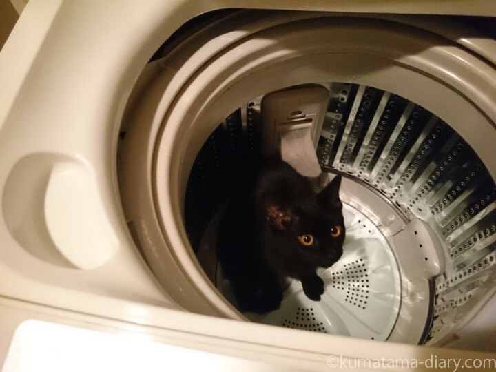 洗濯機の中のふみお
