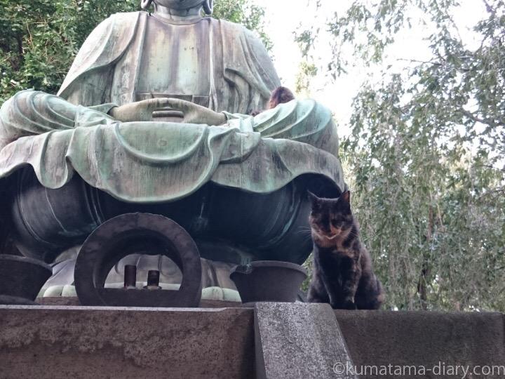 大仏とサビ猫さんと三毛猫さん