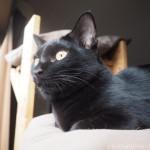 キャットウォークから外を見る子猫