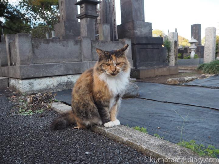 吉祥寺の三毛猫さん