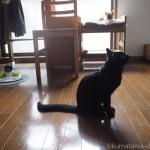 玄関で出迎えてくれる猫たち