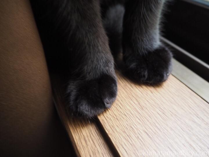 窓台に乗るふみおの前足