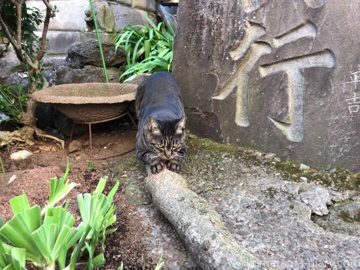 木で爪を研ぐキジトラ猫さん