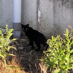 【千葉】駐車場の黒猫さん
