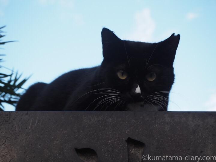 墓の上の黒猫さん