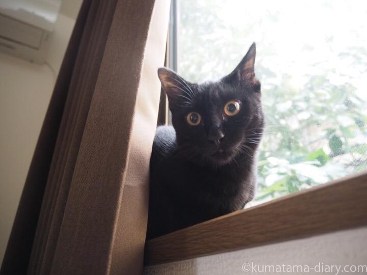 窓台に乗るふみお