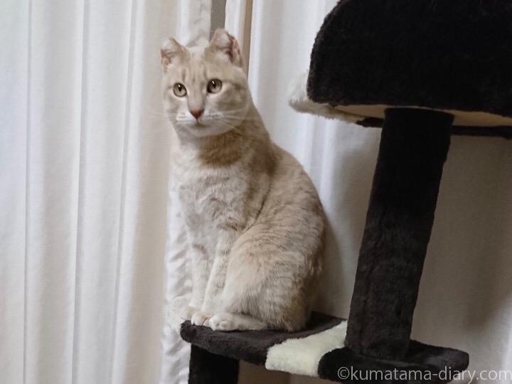 クリーム猫マイケルくん