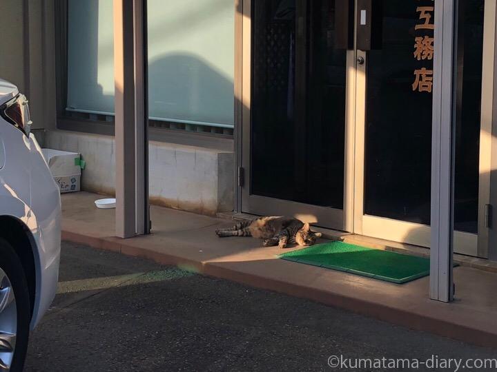 寝そべるキジトラ猫さん