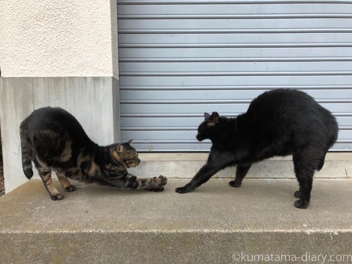伸びをする黒猫さんとキジトラ猫さん