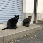 【文京区】「白山神社」の仲良し猫さん