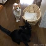 手作りごはんを待つ猫たち