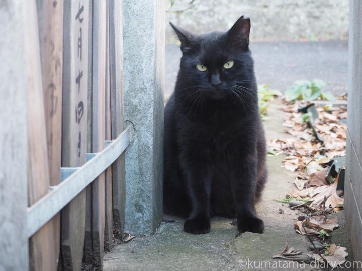 墓地の黒猫さん