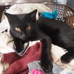 洗濯物が好きな子猫