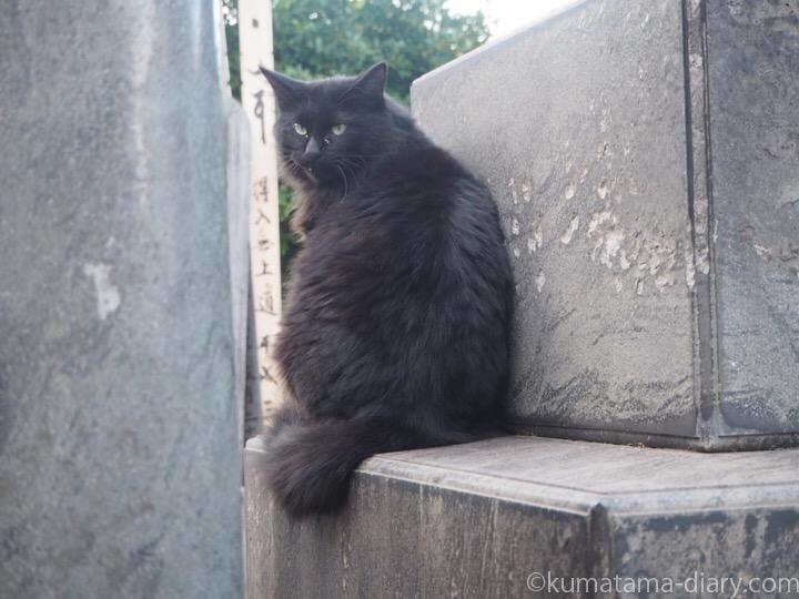見返り黒猫さん