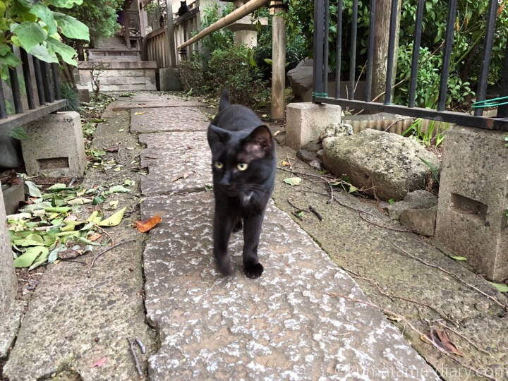 白山神社黒猫さん