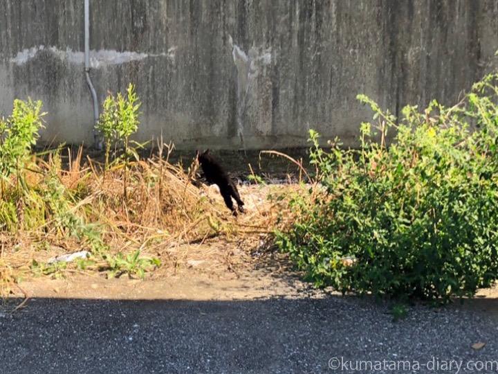 駐車場の黒猫さん