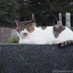 【文京区】吉祥寺のお墓の上の猫さんたち