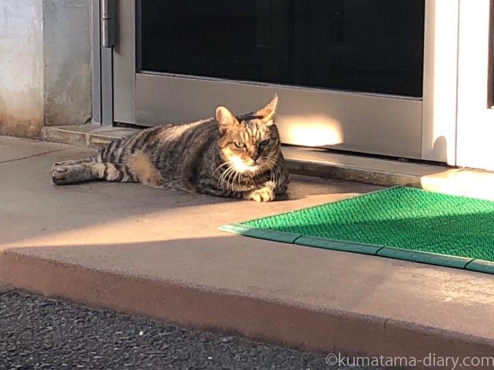 起きたキジトラ猫さん