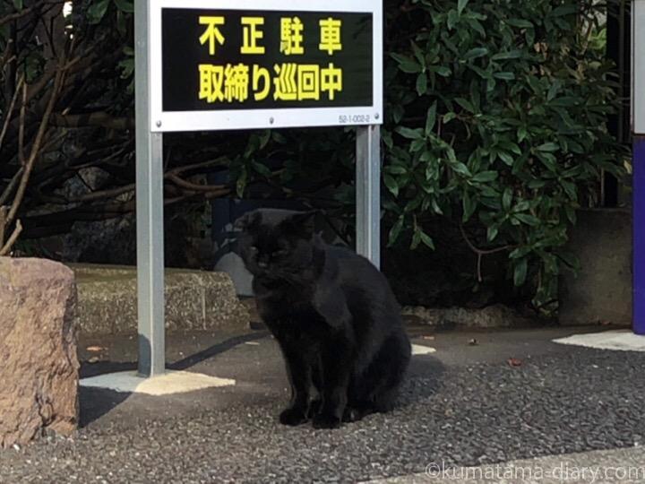 駐車場黒猫さん