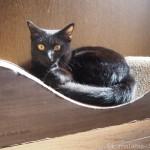 【月命日】黒猫のオスはかっこいいとつくづく思います