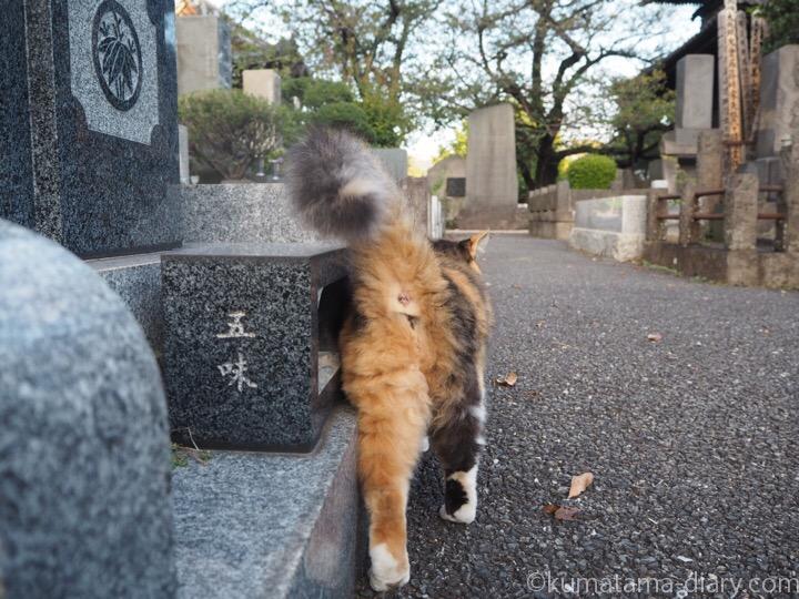 三毛猫さん後ろ姿