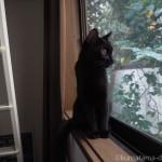 2階の部屋の窓から外を見る子猫