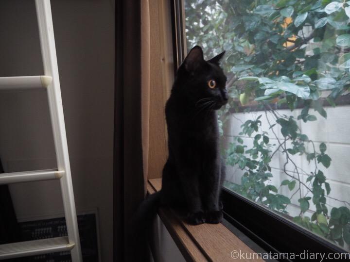 窓から外を見るふみお