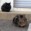 黒猫さんとキジトラ猫さん