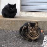 いつも一緒にいる「白山神社」の仲良し猫さん