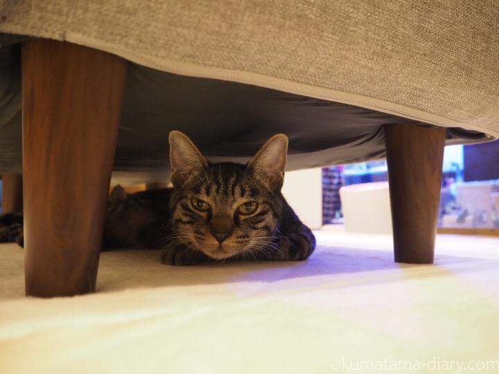 ソファー下のキジトラ猫さん