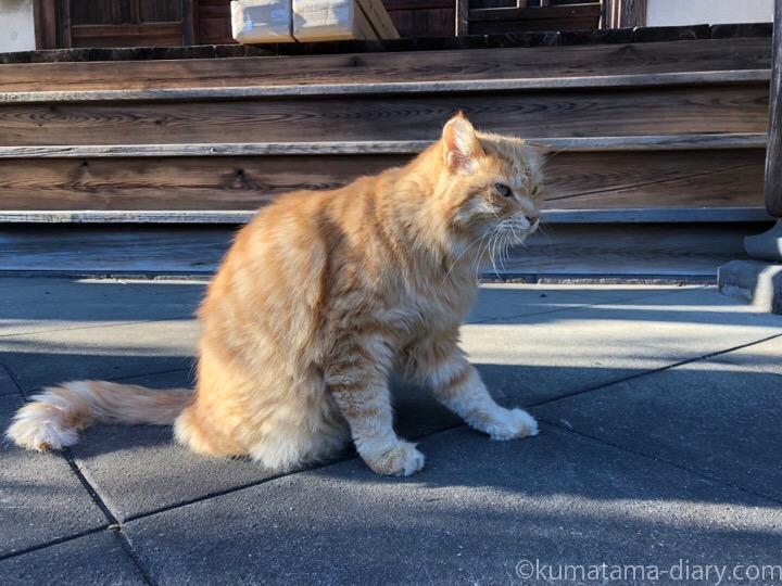 お寺の長毛猫さん