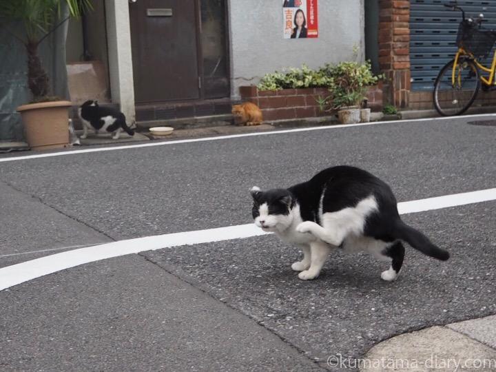 入谷の猫さん