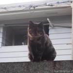 【文京区】2匹の可愛らしいサビ猫さんに会いました