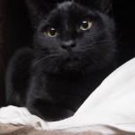 ペットの「夢こたつ」が気に入った子猫