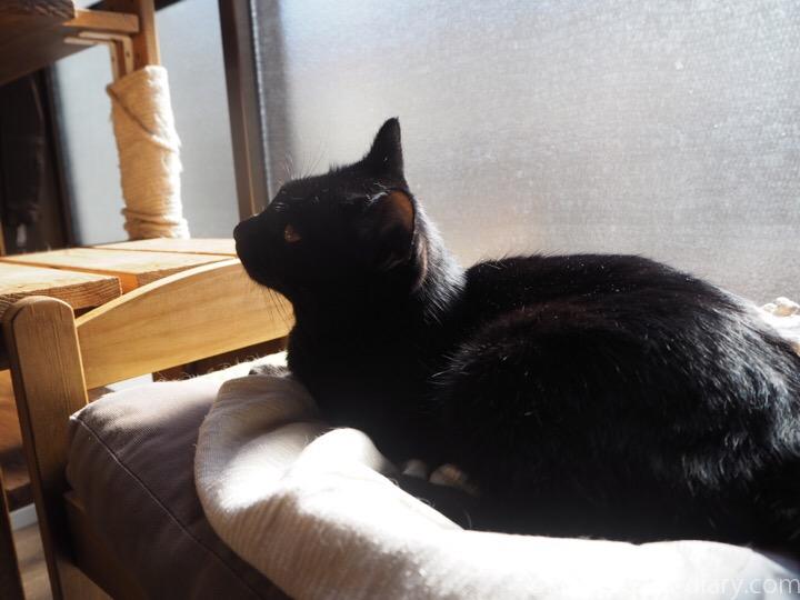 IKEA猫ベッドのふみお