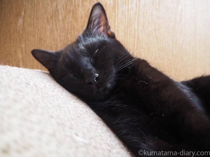 眠るふみお