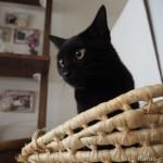 【月命日】子猫が落としても割れなかった「ホルムガード フローラベース」