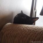 「ガリガリソファスクラッチャー」で寝るようになった子猫