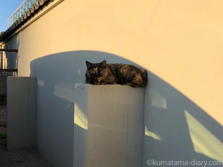 駐車場のサビ猫さん